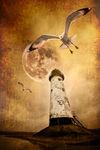 Lighthouse-lunar-gulls