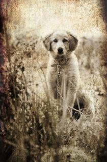 grunge puppy by meirion matthias