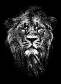 strength and pride by meirion matthias
