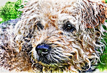 scruffiest dog in the world by meirion matthias