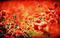 Poppy-bokeh-texture