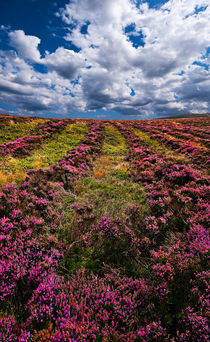 lines of heather by meirion matthias