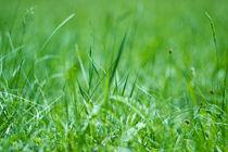 Das Zirpen im Gras von Katharina Weigl