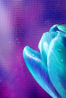 blaue Krokusblüte von tinadefortunata