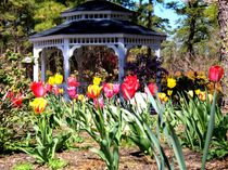Tulips by Gazebo  von Rick Todaro