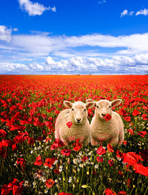 twins in the poppies by meirion matthias