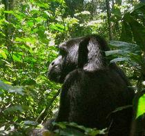 Gorilla von Bettina Breuer