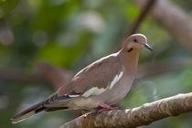 Dove-0142-c-1