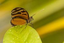 1154-orange-butterfly