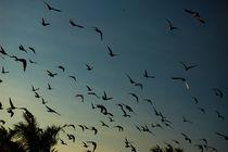 Fall Migrations - Herbst Wanderung von Doug Graham