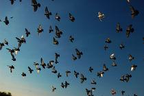 Flock - Schwarm by Doug Graham