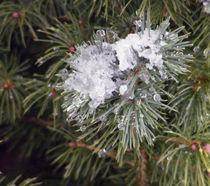 Pine,Snow and Ice von Sandra Woods