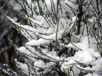 Fantasy Snowfall von Sandra Woods