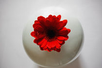 Red Gerbera In White Vase von inkedsandra