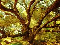 Magic Tree by Robert Ball