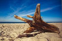Stumpen am Strand by dresdner