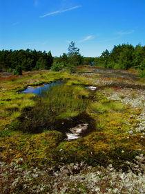 Frühling in Finnland by Veit Schuetz