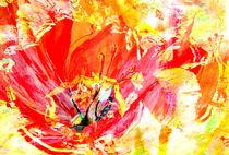 Tulpen by Matthias Rehme