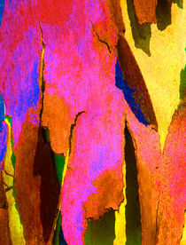 Summer Eucalypt Abstract 8 by Margaret Saheed