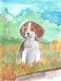 Ein Beagle Welpe im Feld von Lidija Kämpf