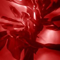 Feuerbohnenbluete