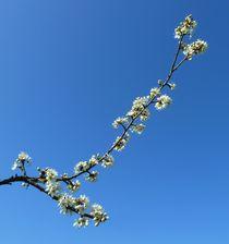Spring Blossom Branch by John McCoubrey
