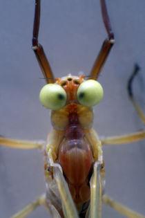 Verrücktes Insekt von Jens Berger