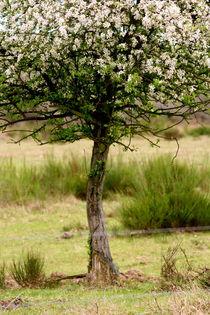 Obstbäumchen von © Ivonne Wentzler