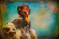 Finer Feathered Friends- Penelope, Queen of the King Vultures by Alan Shapiro