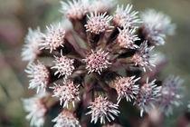 Blume von Jens Berger