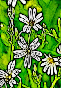 Factal-stitchwort-3141784-copy