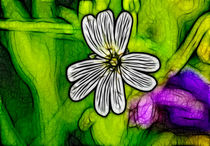 Factal-stitchwort-3141829-copy