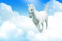 White horse moving through the clouds by Tanja Krstevska
