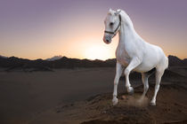 White horse and the sunset by Tanja Krstevska
