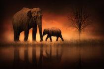The-elephants-at-dusk-2