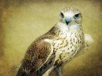 100-7629-hawk-textured