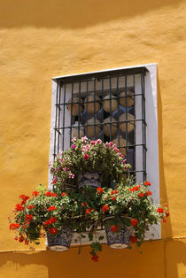 PUEBLA WINDOW Mexico von John Mitchell