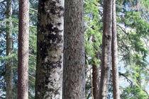 Waldposter von Jens Berger