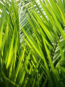 Palmblätter by pichris