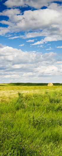 Hay-ball in a field in South Dakota, USA. by Tom Hanslien