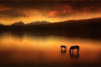 The Horses at Sunset by Jennifer Woodward