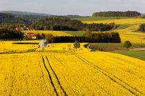 Gelbes Land von Wolfgang Dufner