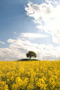 Farben des Frühlings by Jana Behr