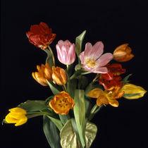 tulpenbouquet mit anthurie von helmut krauß
