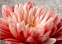 In the pink by John Biggadike