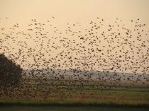 Vogelflug von Ka Wegner