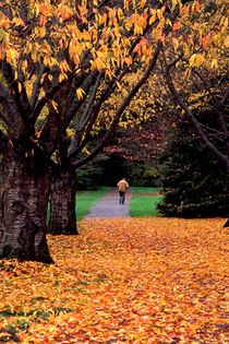 Autumn Walker 223 by Patrick O'Leary