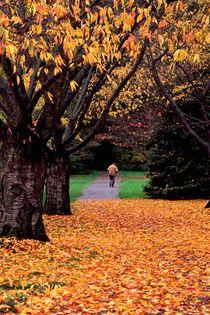 223af-autumn-walker-971441-001-v-15