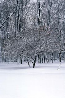357af-winter-stillness-900079-001-v-9