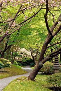 Nitobe Walk 528 by Patrick O'Leary